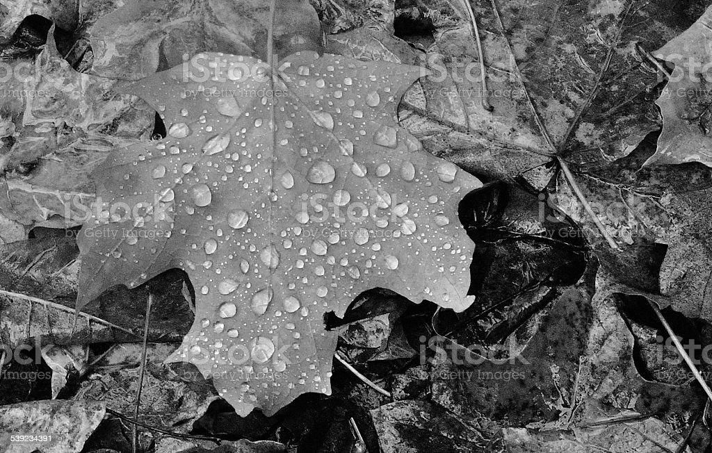 Chuva dia de outono-preto e branco de imagem foto royalty-free