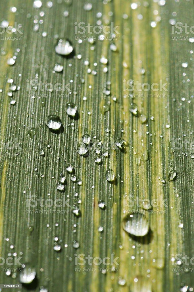 rain dops on grass royalty-free stock photo