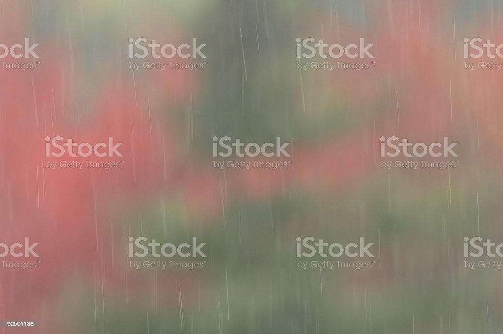 Rain droplets in the autom colours royalty-free stock photo