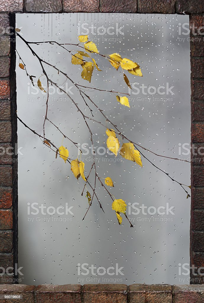 Rain drops and birch branch in window frame royalty-free stock photo