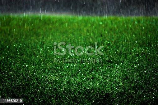 Rain drops falling on lush green grass lawn rainstorn storm drips water refreshing