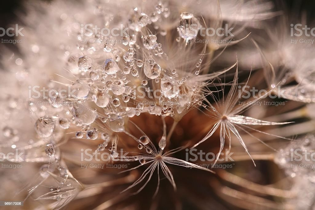 Rain drops on a flower royalty-free stock photo