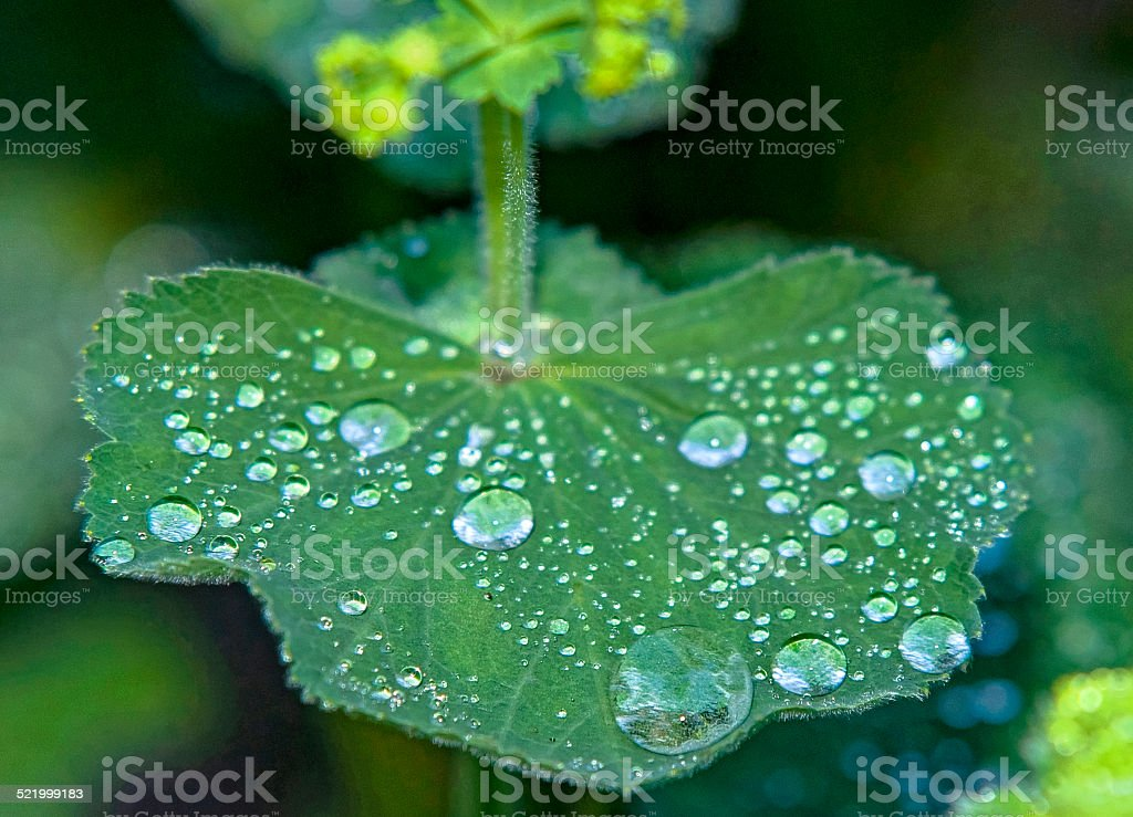 Rain drops on a green plant stock photo