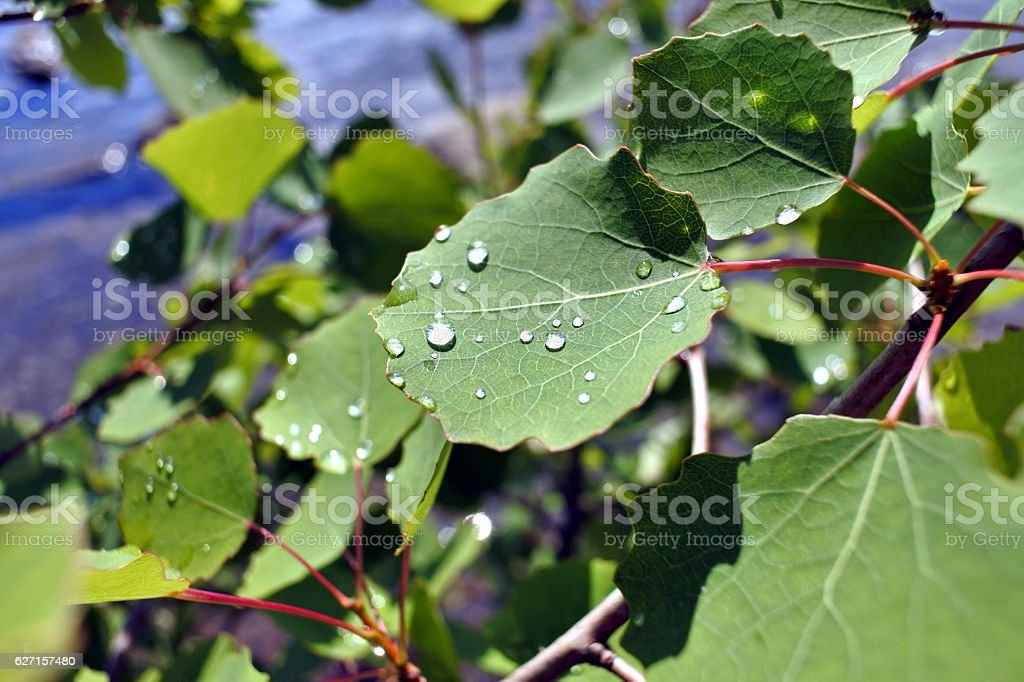 rain drops on leaves in Sunny weather stock photo