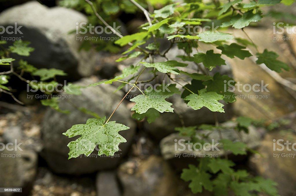 Gocce di pioggia su foglie foto stock royalty-free