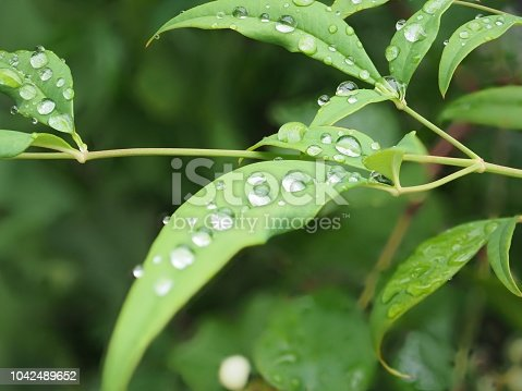 Rain drops on the leaf macro and Foucus stacking