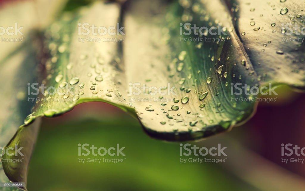 Rain drops on the leaf. stock photo