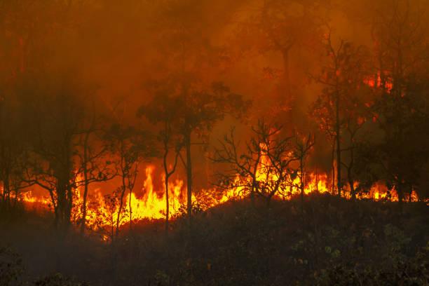 Regenwaldbrandkatastrophe brennt von Menschen verursacht – Foto