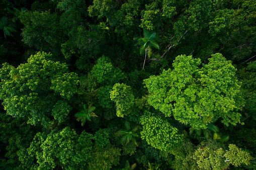 Rain forest from air near Kuranda, North Queensland, Australia