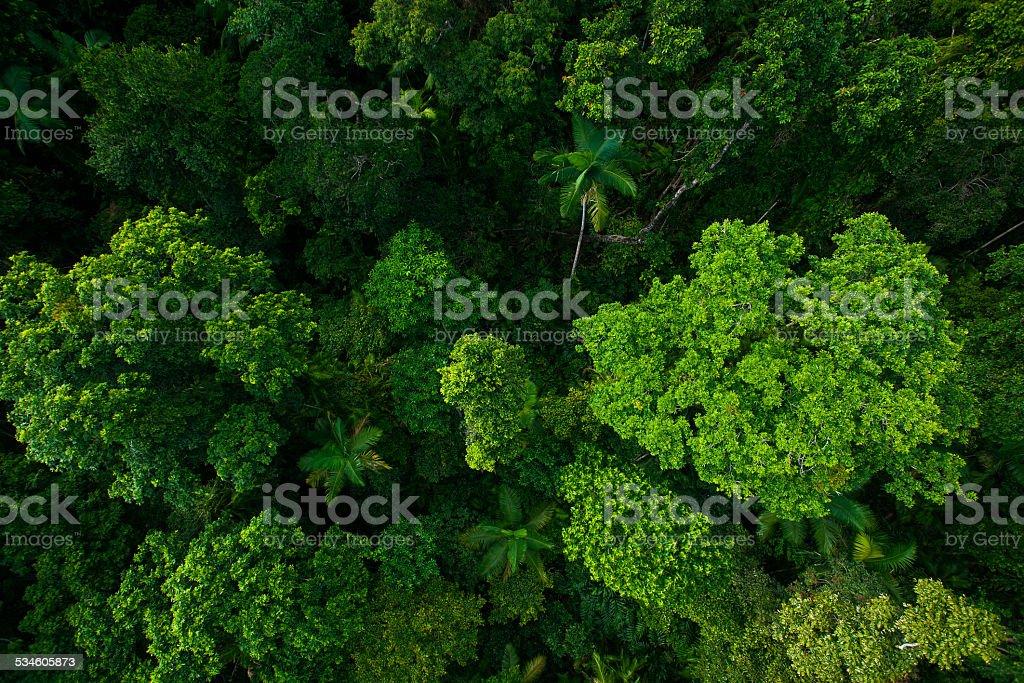 Rain forest from air near Kuranda, Queensland, Australia stock photo