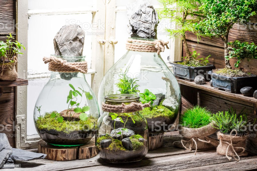 Rain forest in a jar as save the earth idea royalty-free stock photo