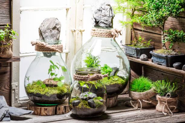 regenwald in einem glas als rettung der erdidee - terrarienpflanzen stock-fotos und bilder
