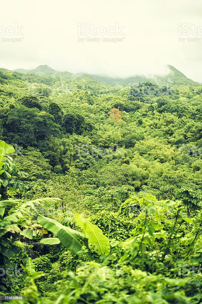 Rain forest in Grenada royalty-free stock photo