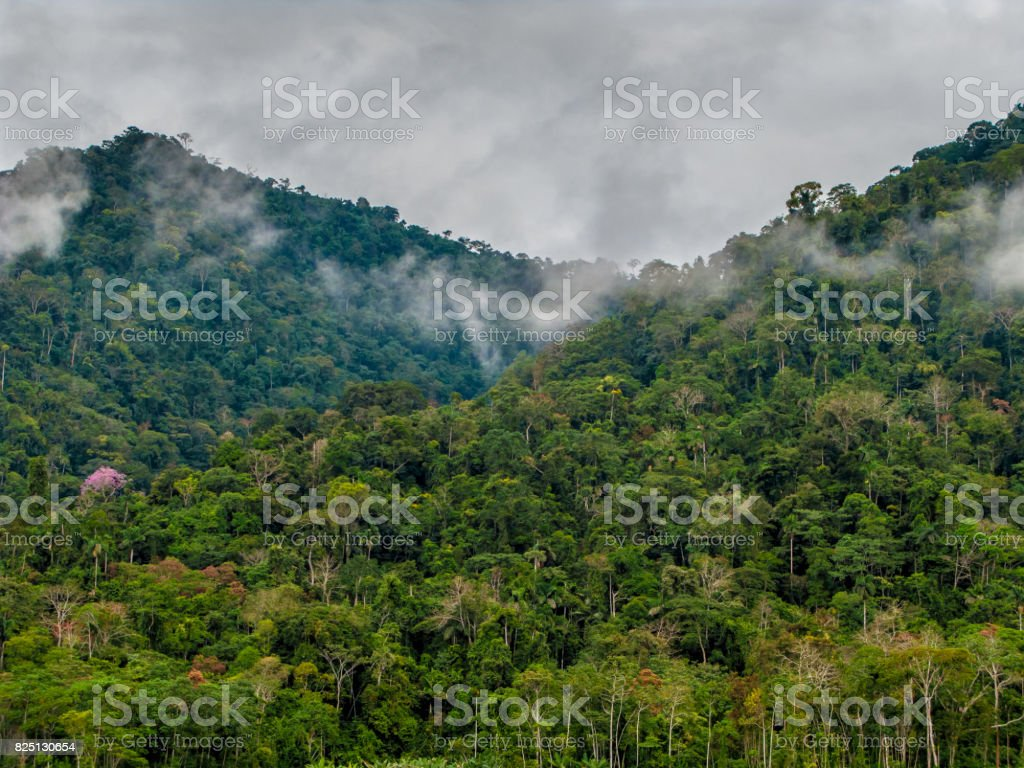 Rain forest in Manu National Park stock photo