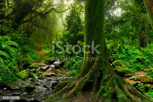 Rain forest with river in northern Thailand