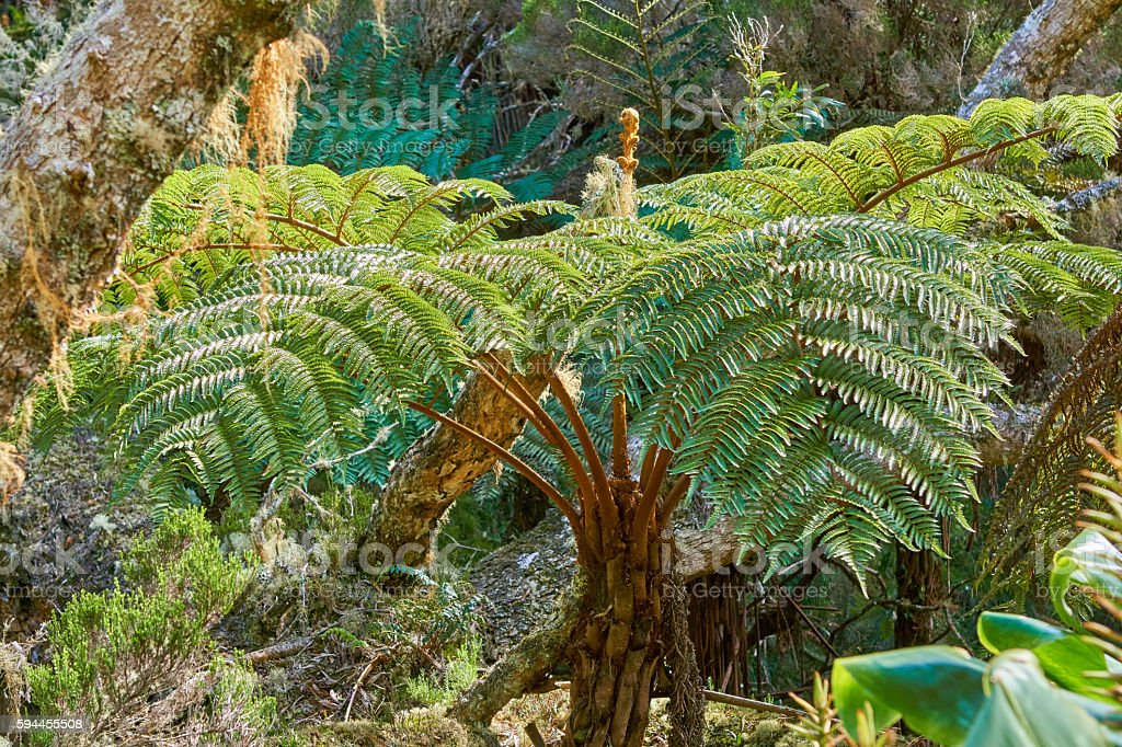 Rain forest in Reunion Island stock photo