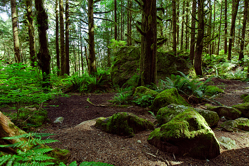 Rain forest in summer in Vancouver