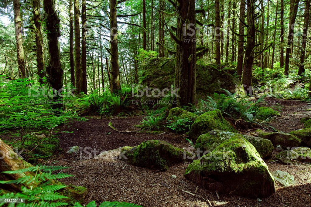 Rain forest in summer in Vancouver stock photo