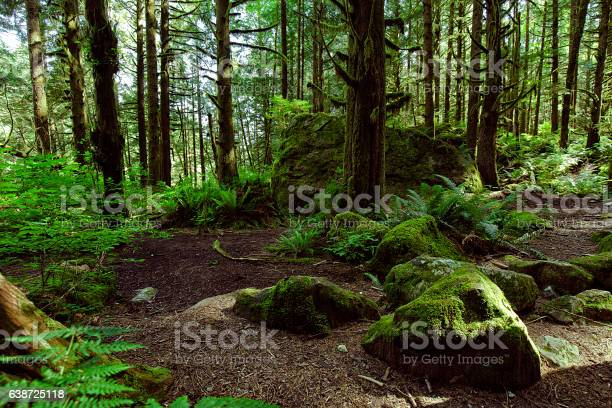 Photo of Rain forest in summer in Vancouver
