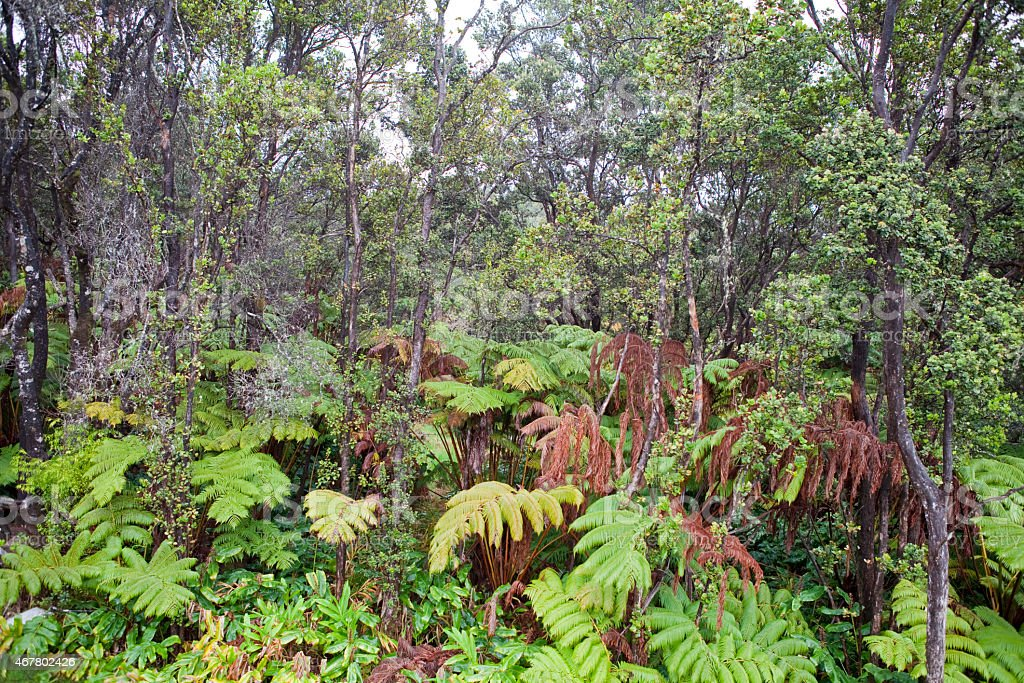 Rain forest located in Hawaii. stock photo