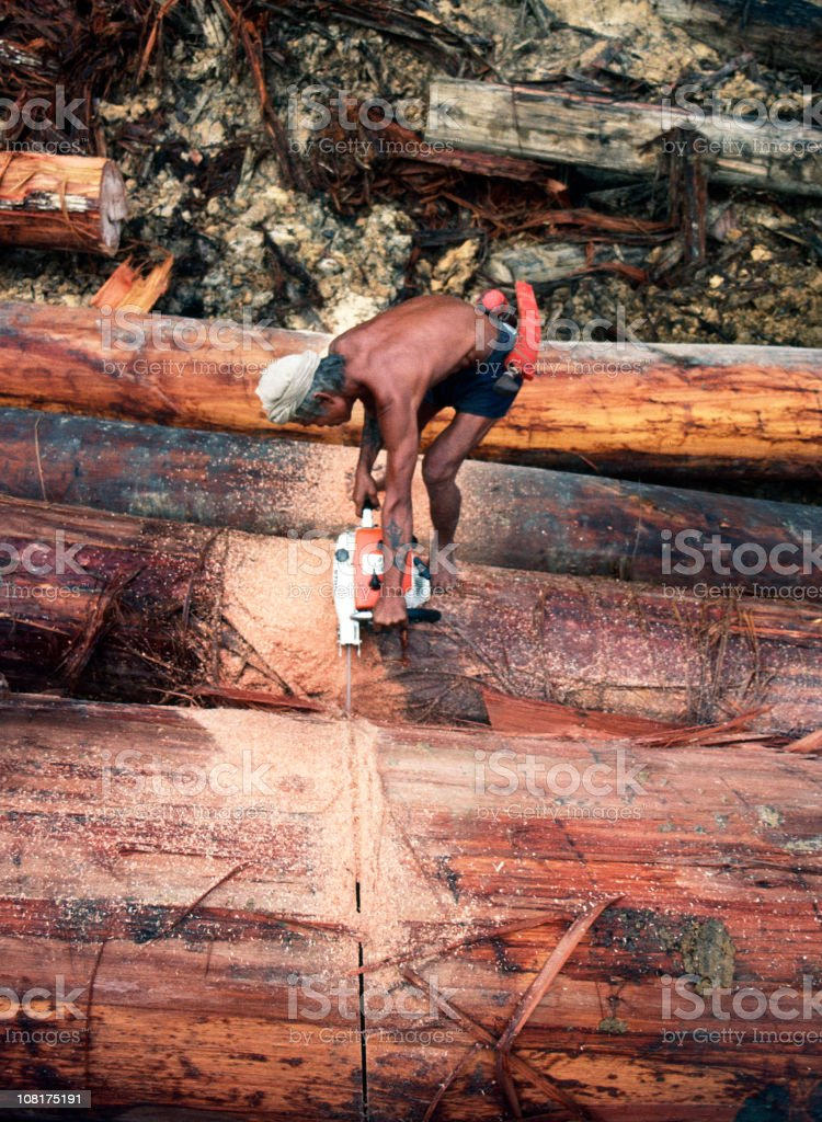 Rain Forest Logging royalty-free stock photo