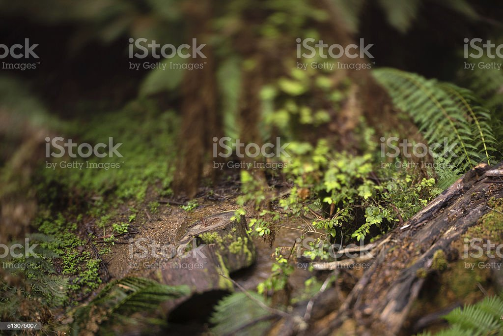 Rain forest logs stock photo