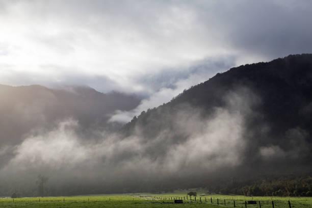 Rain Forest - New Zealand stock photo
