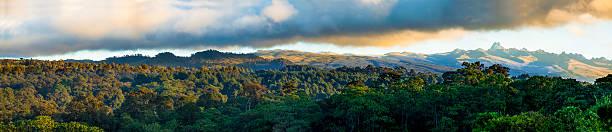 Forêt tropicale du Mont Kenya - Photo