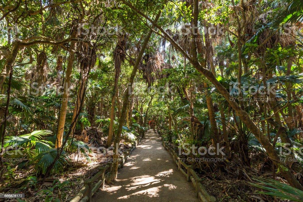Rain forest park in Aoshima shrine in Miyazaki, Japan stock photo