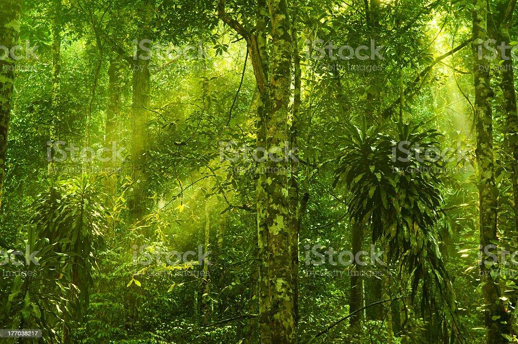 Rain forest stock photo