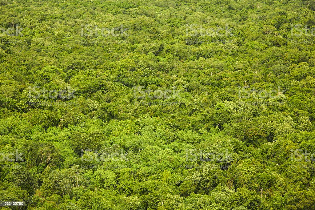 Rain Forest Top View Texture And Background Royalty Free Stock Photo
