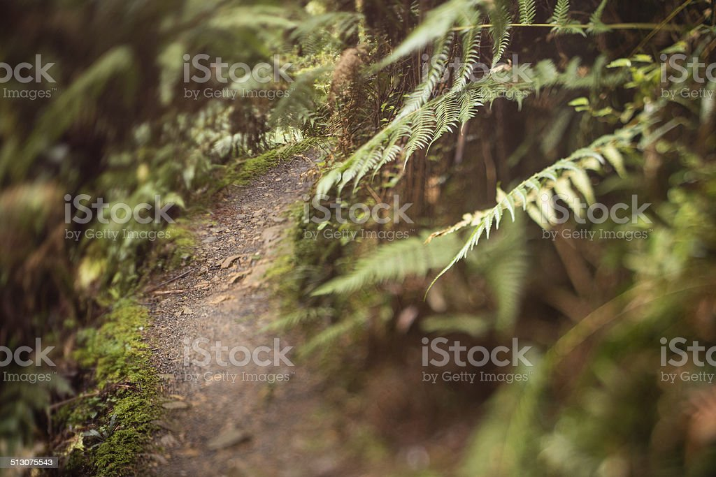 rain forest trail stock photo