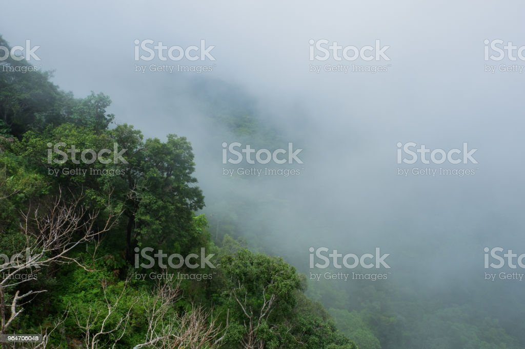 rain forest with mist royalty-free stock photo