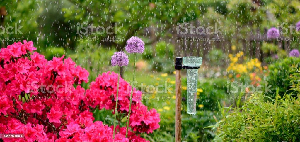 Rain gauge - Rain gauge - 15ml