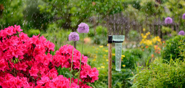 Regenmesser – Foto