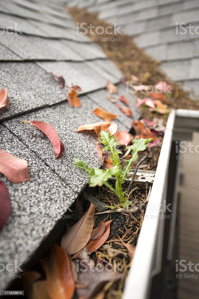 Rain gutter full of leaves and debris stock photo