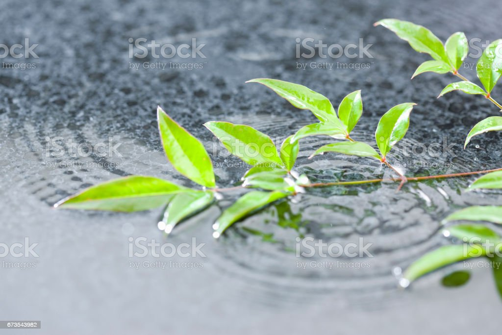 Rain images royalty-free stock photo