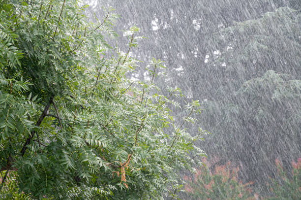 Regen im Sommer mit Pflanze – Foto