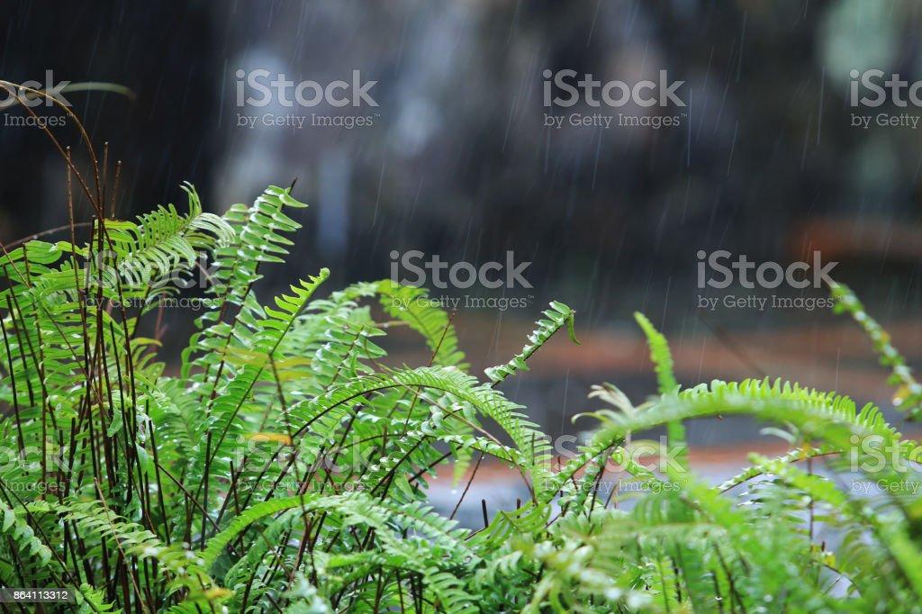 Rain in the garden royalty-free stock photo
