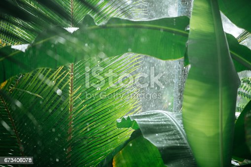 Heavy rain in tropical forest. Palm and banana tree leaves on the background