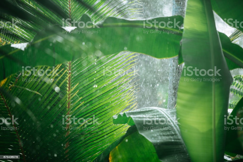 Rain in tropical woods stock photo