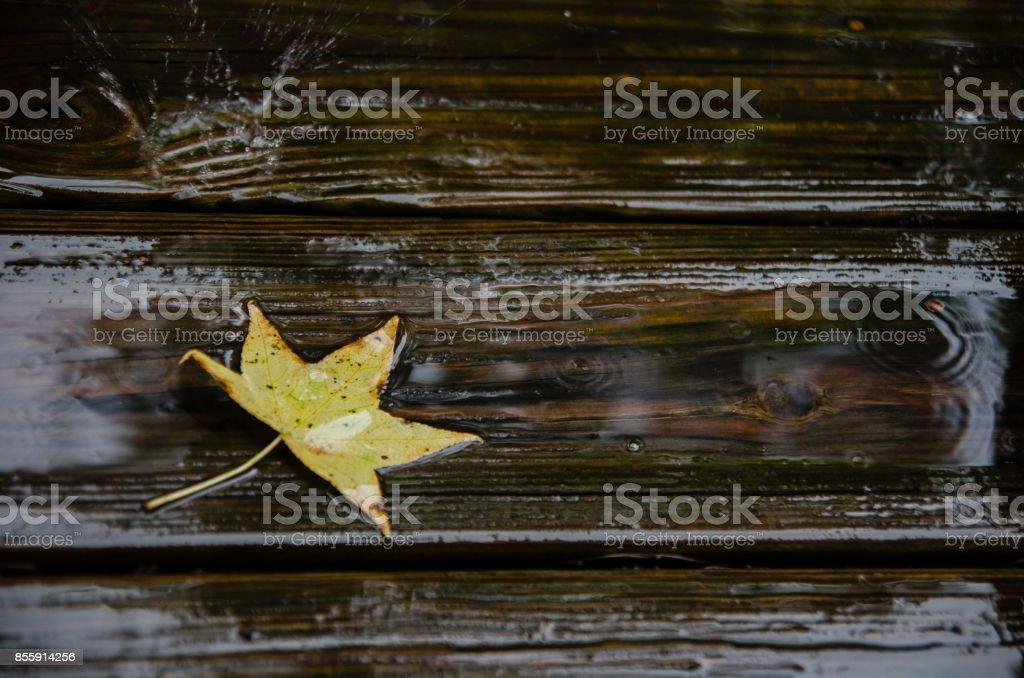 Rain leaf stock photo