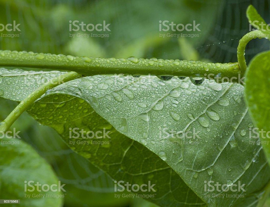 rain leaves royalty-free stock photo