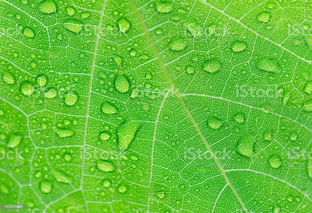 Rain on a leaf royalty-free stock photo