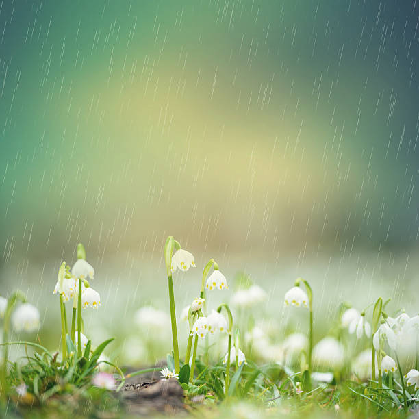 rain over spring snowflake - snowdrops stock photos and pictures