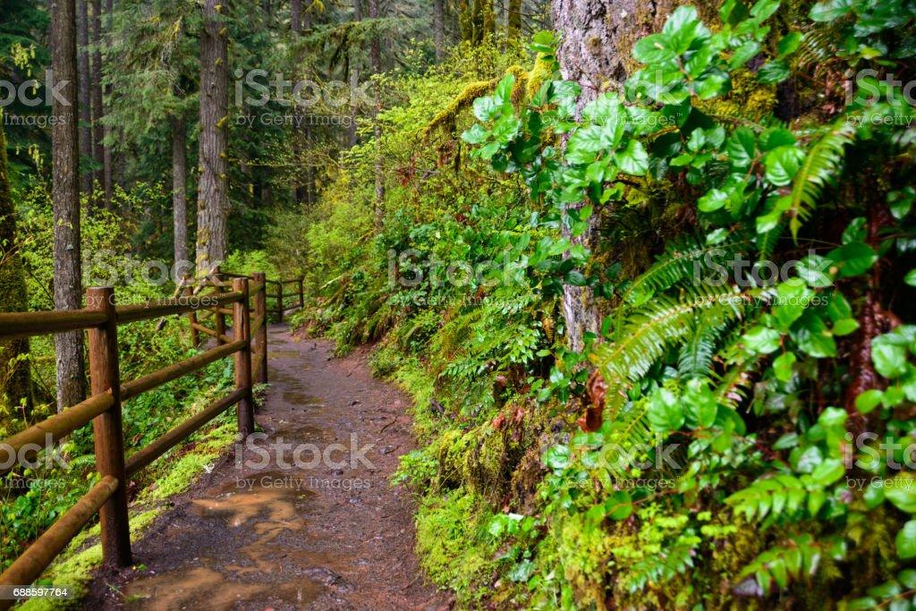 Rain Soaked Trail, Silver Falls State Park stock photo