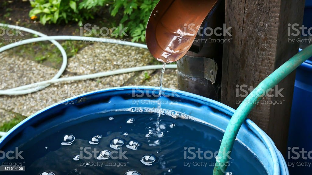 Rain Water Is Streaming into Barrel in the Garden. stock photo