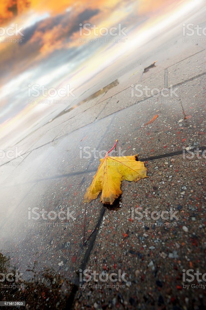 Rain wet autumn leaf on asphalt royalty-free stock photo