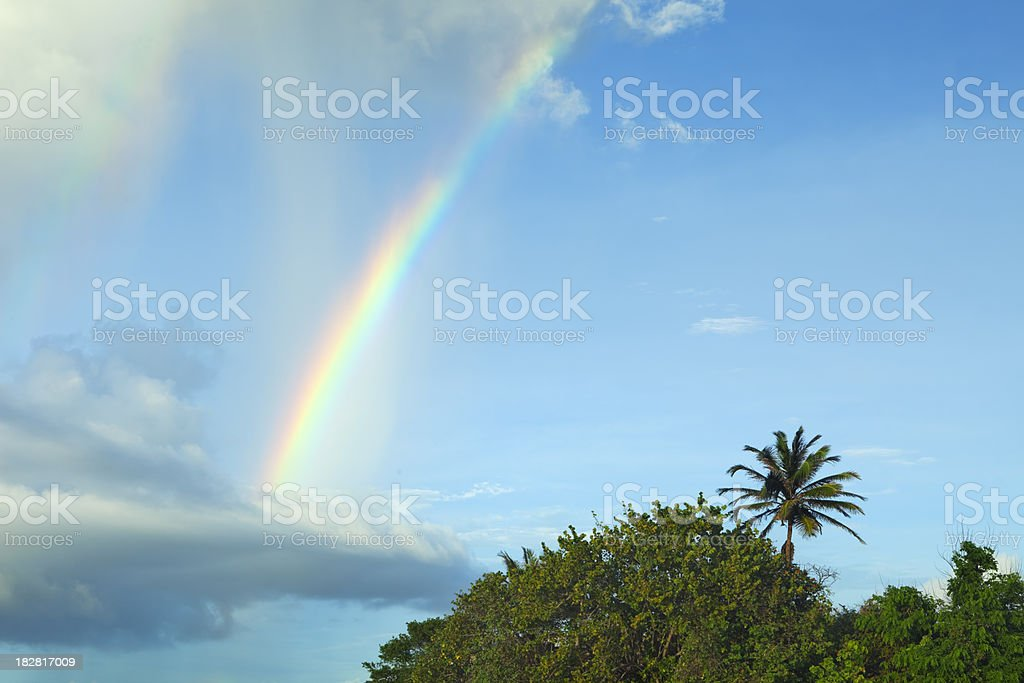 Rainbow and palm tree on Curaçao, Netherlands Antilles stock photo