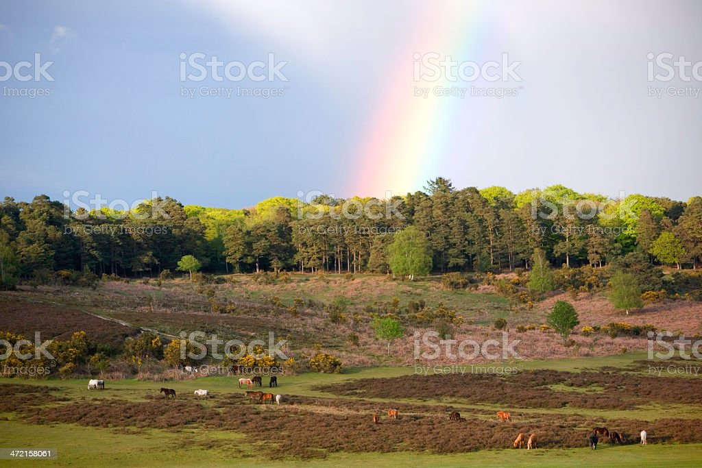 Rainbow and Ponies New Forest National Park stock photo